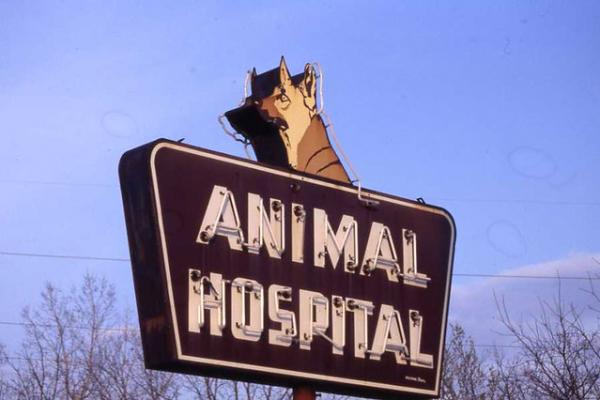 Cats & Docs: The Top 10 Awesome Animal Hospital Signs