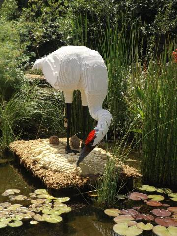 Big Bird (Photo by Annie Bear)
