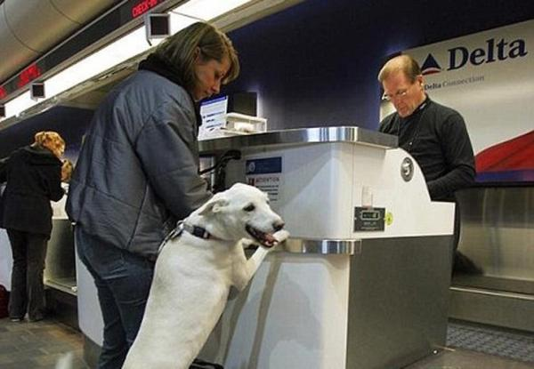 Dog checking in at airport