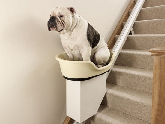 Stair lift for obese dogs (prototype): image via newslite.tv