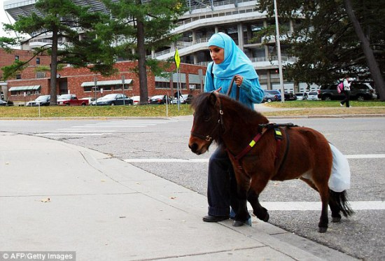Guide horse, Cali, acceptable in a Muslim household: ©AFP, Getty images, via dailymail.co.uk