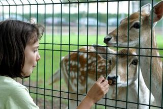 Consider a career as a zookeeper: image via ehow.com