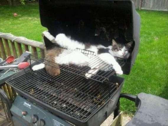 Barbecue Cat (Image via Atomica)