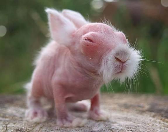 Baby Wombat (Image via Facebook)