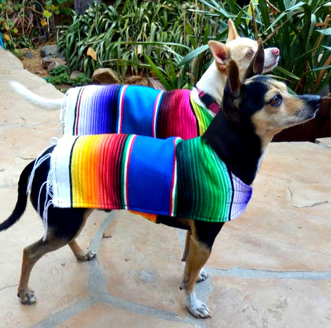 Handcrafted Pet Apparel By Baja Ponchos Made From Mexican Serape Blankets: Baja Poncho & dog image via Baja Poncho