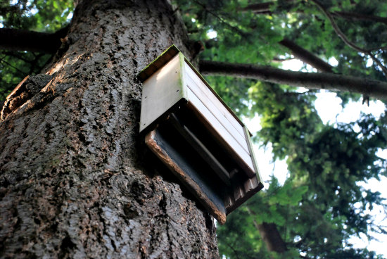 Going Batty Building Bat Houses Is Good For The Environment
