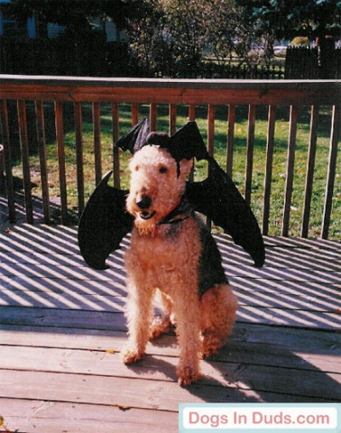 This is Bat Waldo in his Barking Bat Dog Costume: image credit: DogsInDuds.com