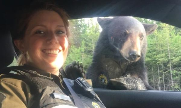 Busybody Bruin Shares Selfie With Québec Smokey Bears
