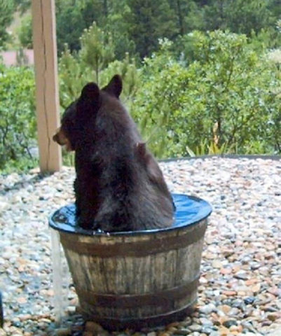 Skinny Dipping Black Bear (Image via Awesome Inventions)