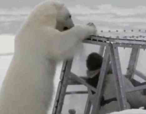 Polar Bear Systematically Trying To Break Into Cage (You Tube Image)