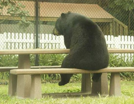 """Yogi"" the Bear (Image via Laugh it Out)"