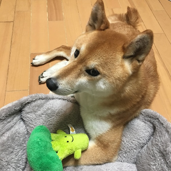 Oh Gnaw You Didn't: 10 Curiously Cute Japanese Dog Chew Toys