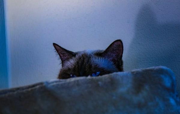 "Bad Kitties: The Top 10 'Beware Of Cat"" Signs   Petslady com"