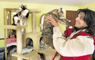 Director of no kill shelter, Pets Alive, visits cat play room in Orange County, NY: image by Times Herald-Record/DOMINICK FIORILLE via recordonline.com