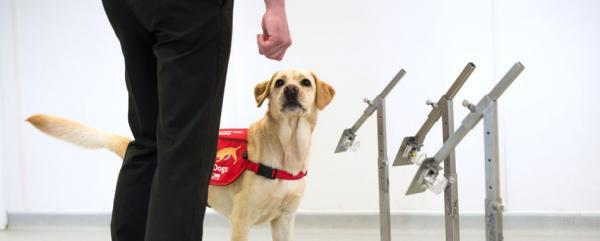 COVID-19 Training by Medical Detection Dogs