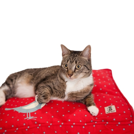 Molly Mutt Cat Duvet