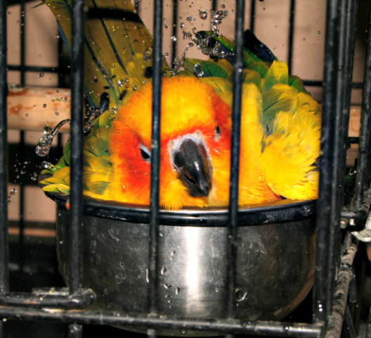 Bathing is Essential to a Bird's Overall Health: Some birds love to bathe