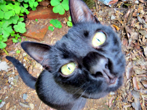 Pet Safety Tips: Is your cat getting enough water?