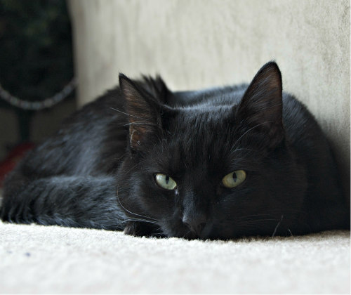 One black cat can look very much like another...