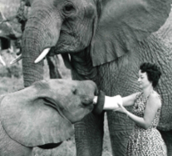 Daphne Sheldrick and Friends (Image via The David Sheldrick Wildlife Trust)