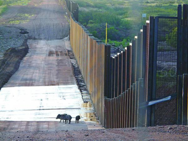 The Top 8 Animals Of The U.S. Southern Border