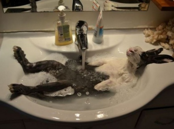 Bunny Bath (Image via Bored Daddy)