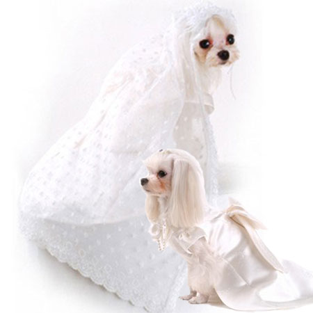 The Well-Dressed Dog At A Wedding: 10 Awesome Dog Bridal Gowns ...