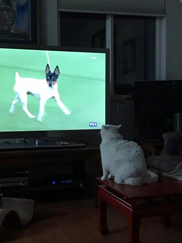 Lily Watches the Dog Show