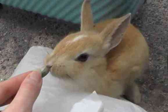 A Baby Rabbit of Rabbit Island (You Tube Image)