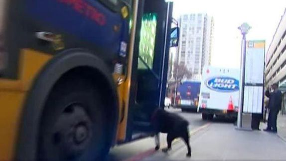 Eclipse Rides the Bus (Image via You Tube)
