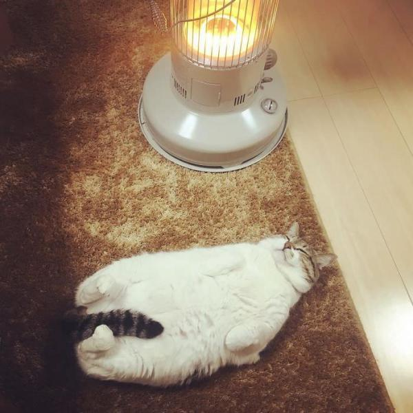 Cool Cat Busao Cuddles Up To Electric Heater