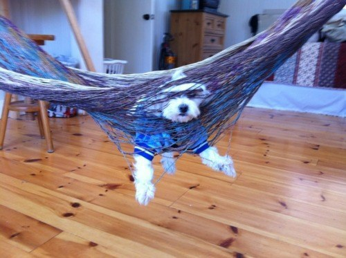 Tied Up Dog (Image via BuzzFeed)