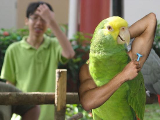 Bird imitates man