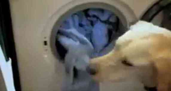 Byron helps do the laundry (You Tube Image)