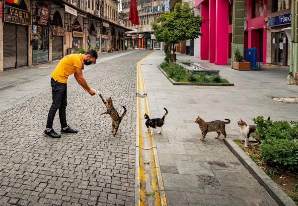 'Social Distance Meal Order,' © Mehmet Asian/Comedy Pet Photo Awards 2020