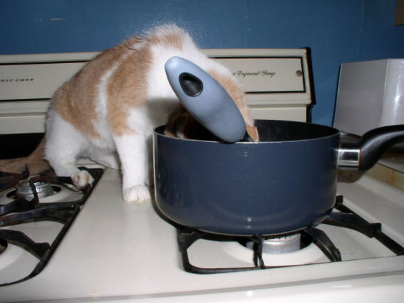 """Can I lick the pot?"" (Public Domain Image)"