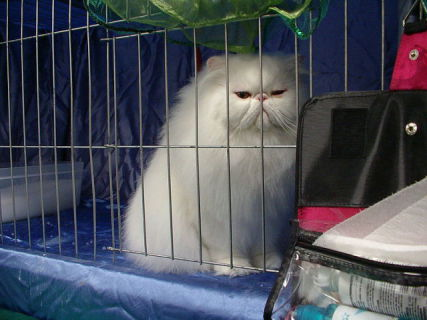 Cat in Cage (Photo by Sarah Marriage/Creative Commons via Wikimedia)