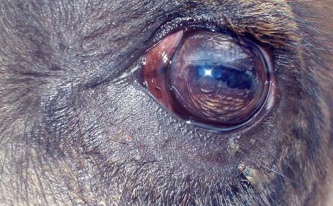 Camel's Eye (Public Domain Image)