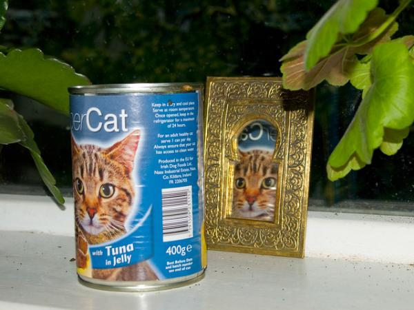 Amazing International Cat Food Cans -