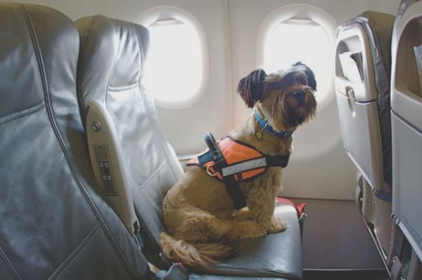 a republican and a democrat agree  pets should not die on airplanes