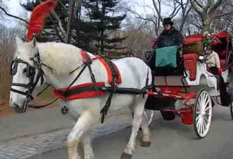 Horse and Carriage in Central Park (You Tube Image)