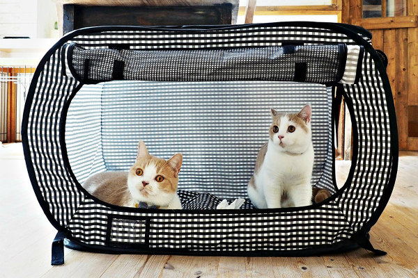 cat crates for travel