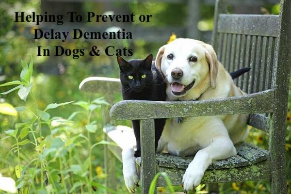Helping to prevent or delay dementia in dogs and cats