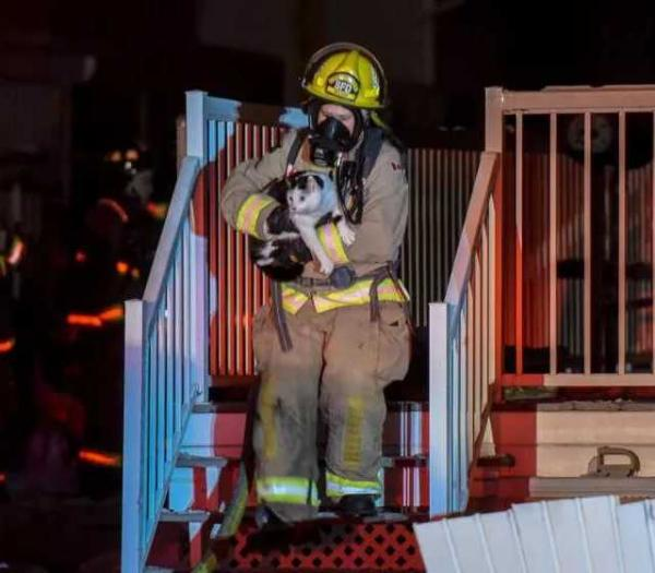 Hero Cat Bites Sleeping Owner, Saves Family From House Fire