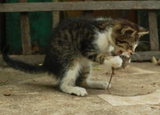 Cat eating a mouse: image via freepik.com