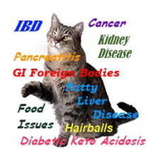 A healthy diet can help prevent these diseases: image via vet-pet-health-advice.com