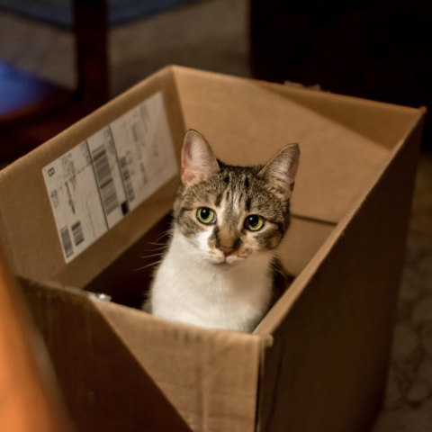 Cat in the Box: Discarded packaging like boxes and bags make great cat toys