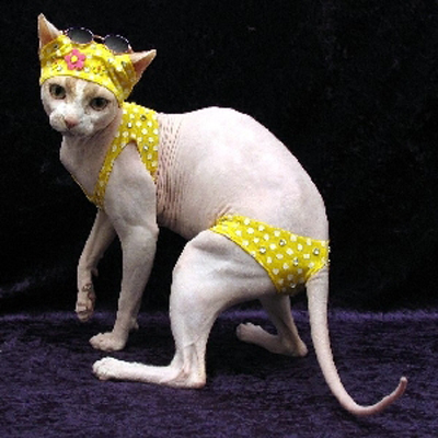 There similar Cat with bikini