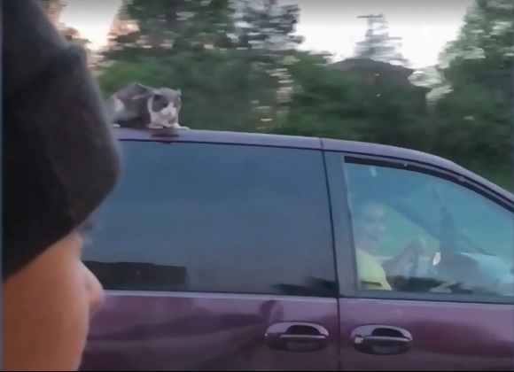 Forgotten Cat Surfs Van Roof On Nebraska Highway