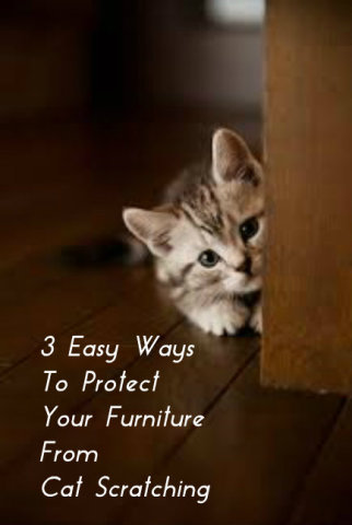 There Are Some Simple Things You Can Do To Stop Your Cat From Scratching Or Clawing On Furniture Here 3 Tips Try
